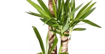 IAQ e risparmio energetico attraverso l'utilizzo di piante (ultimato)